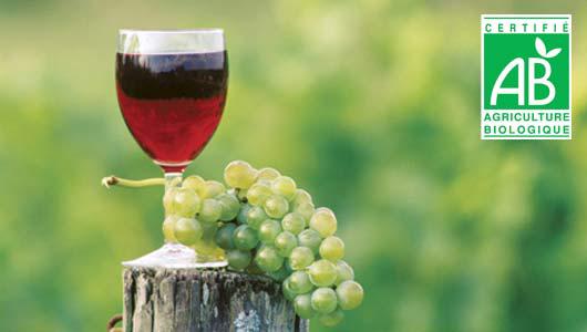 vin-bio