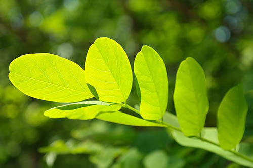 E140-chlorophylle